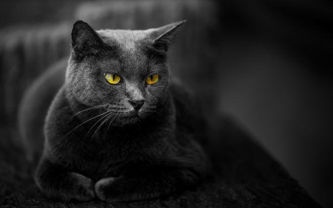 Sen o černé kočce