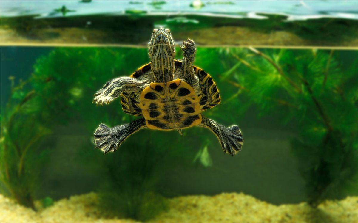 Želva domácí - Akvárium