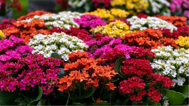 Pokojové rostliny, které zvládne pěstovat každý