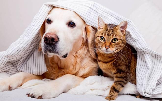 Šest znamení zvěrokruhu, která milují zvířata více než lidi. Najdete se mezi nimi?