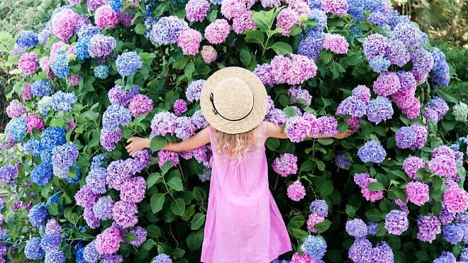Ta nejvhodnější péče o vaše hortenzie, aby se dožily jara