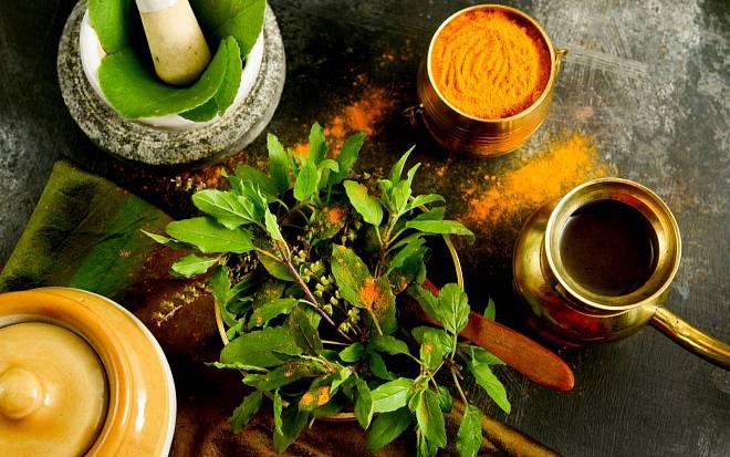 Posvátná bylinka Tulsi: Vypěstujte si indickou bazalku